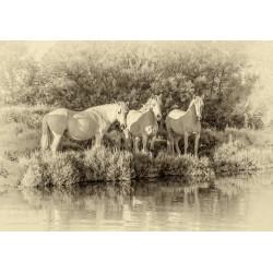 "Leinwand ""Camargue Ponys"""